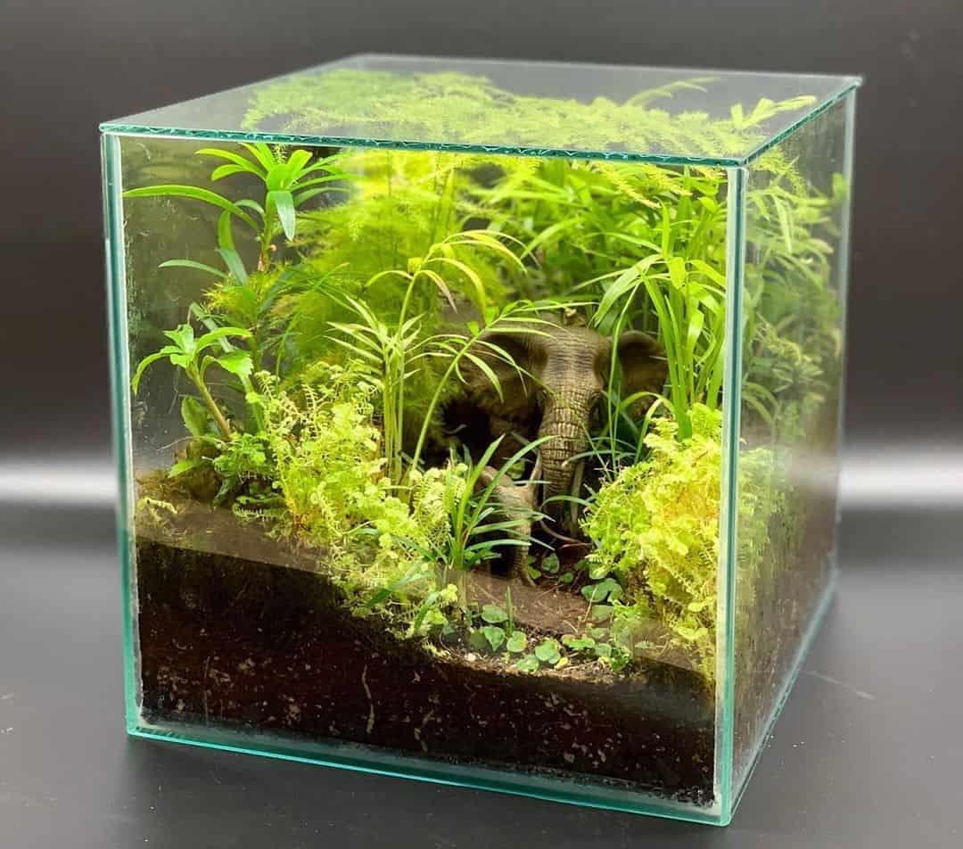 Indoor Plants Simple Guide To Terrariums