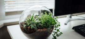 Terrarium Plants – Why Interior Designers Love Them?