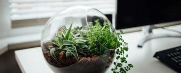 How To Use Terrarium Plants