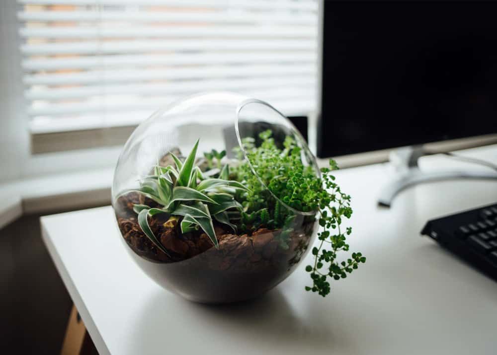 How To Use Terrarium Plants