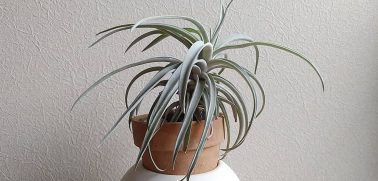 What is Air Plants?