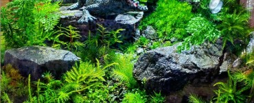 What Soil Is Best For Terrariums