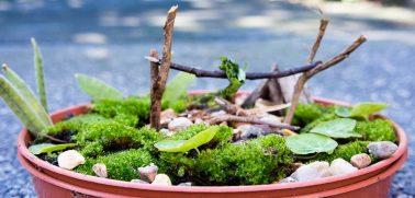 Why Is Miniature Garden So Popular?