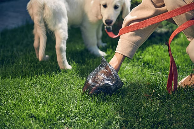 how to get whipworms out of yard